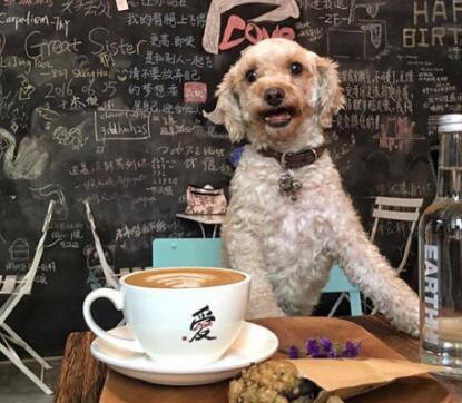 昆山咖啡店装修预算,咖啡店装修设计什么风格好?